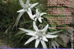 354-Stella_dedica-IMG_0251