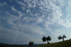 cielo e ulivi